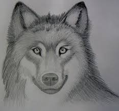 realistic wolf sketch mark crilley by foreverstrawberries on