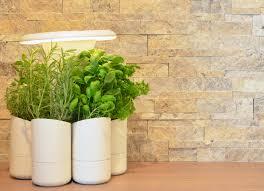jardin interieur design greenpaper design