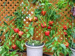 snippits and snappits hydroponic gardening target of the insane