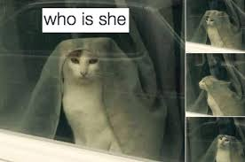 Hilarious Cat Memes - 44 hilarious cat tweets from 2016