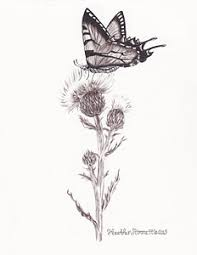thistle drawings page 2 of 3 fine art america