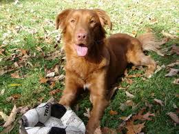 Creature Comforts Pet Sitting All Creature Comforts Pet Sitting Testimonials U0026 Photos All