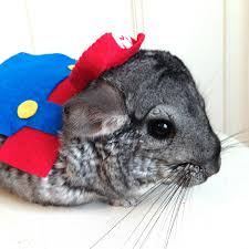 Halloween Costumes Bunny Rabbits Super Mario Bros Costume Hamster Guinea Pig Chinchilla Bunny