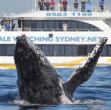sydney harbour cruise what s the best sydney harbour cruise for kids sydney