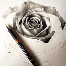 black and white rose sketch art pencil pen drawing realistic