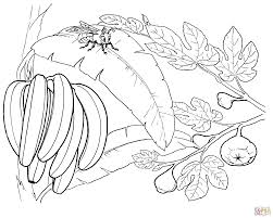 bunch of bananas on a u0027banana u0027 tree coloring page free printable