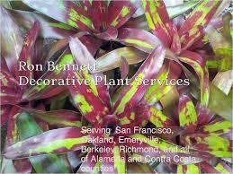 ron bennett decorative plant services home completed splash 12