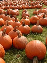halloween u0026 autumn harvest photography from nikon