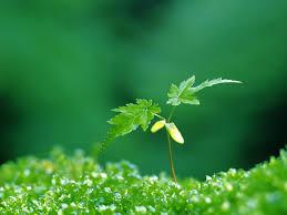 plant 8862 1024x768 umad com