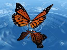 the beautiful butterfly with wings stock photo picture and