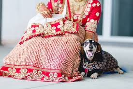 8 ways to involve your dog in your wedding rover com wedding