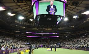 who won the dog show on thanksgiving home page westminster kennel club