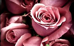 Pink Roses Wallpaper by Rose Wallpapers For Desktop Full Size Hq Images 12 Hd Wallpapers