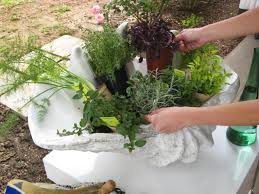 Potted Herb Garden Ideas Create A Stunning Herb Container Garden Hgtv