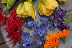 edible blue flowers edible flowers are decorative and delicious by