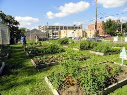 Community Gardens In Urban Areas Land Bank Invites Garden Clubs To Turn Empty Lots Into Green Space