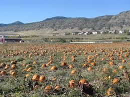 Denver Botanic Gardens Corn Maze Denver Botanic Gardens Pumpkin Festival Colorado Haunted Houses