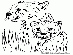 6 pics of baby cheetah coloring pages printable cute baby