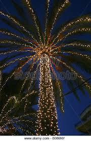 palm tree christmas lights in stock photos u0026 palm tree christmas
