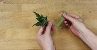 Succulent Boutonniere How To Make A Succulent Corsage Or Boutonniere U2014 Timber Press