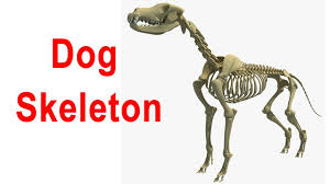 Dog Skeleton Halloween Dog Skeleton 3d Model Youtube