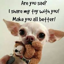 Funny Chihuahua Memes - top 21 most funniest chihuahua memes chihuahua pinterest dog
