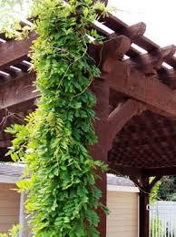 Plants For Pergolas by Pergola Kit Sizes Lounge Size Family Size Entertainment Size