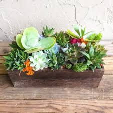dc flower delivery succulents flower delivery in washington send succulents flowers
