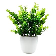 plante verte bureau plante bureau plateau bois de bureau avec plante au choix plante