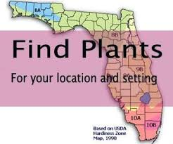 best 25 florida plants ideas on pinterest florida landscaping