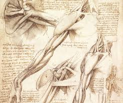 what the old masters knew about anatomy web art academy web