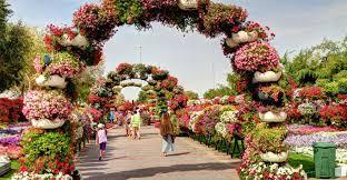 immagini di giardini fioriti al ain paradise garden un trionfo di fiori tra le dune