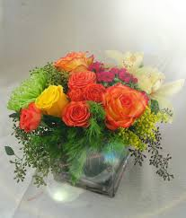 flowers san diego summer dreams in san diego ca rainbow flowers