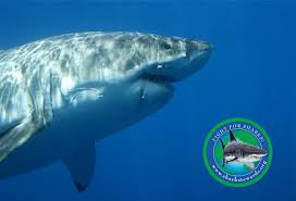 welcome to shark stewards official website shark stewards