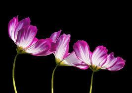 flower free pictures on pixabay