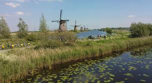 typically dutch windmills wooden shoes tulips and more