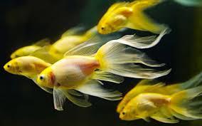 va aqualife u2013 va aquarium balaganesh aquarium u2013