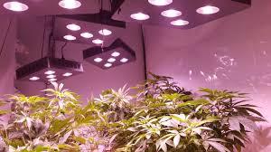 Led Grow Lights Cannabis Scorpion Led Grow Light