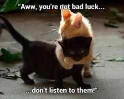 Angry Cat Meme No - 75 hilarious grumpy cat memes best cat memes love memes