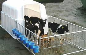 Calf Hutches For Sale Options For Rearing Those Extra Calves 07 February 2016 Premium