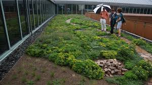 emory knoll farms green roof plants company of the week youtube