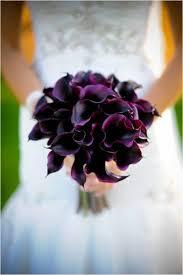 purple calla lilies 25 best purple calla lilies ideas on calla lillies
