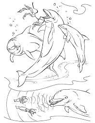 dolphins hunt squids sonar vegies coloring