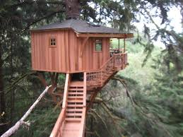 house builder tree house builder tv show host fined for oregon coast construc