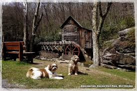 West Virginia How To Travel With A Dog images Jim greenfield jim_jcgg twitter jpg