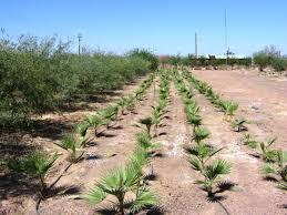 Desert Landscape Ideas by Awesome Desert Landscaping Marissa Kay Home Ideas Unique