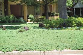 Plants For Front Yard Landscaping - plants for east texas east texas gardening