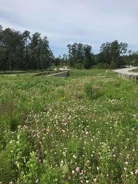 native houston plants native plants grass make mark in springwoods houston chronicle