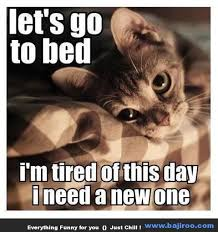 Cute Animals Memes - funny cute cats animals memes images photo gallery 2 bajiroo com