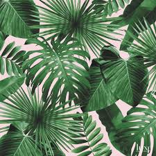 wild thing wallpaper by ghislaine vinas for flavor paper luxe